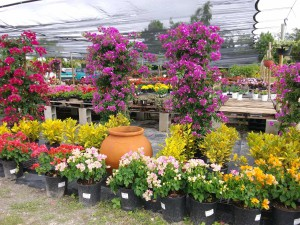Garden With Landscape Design