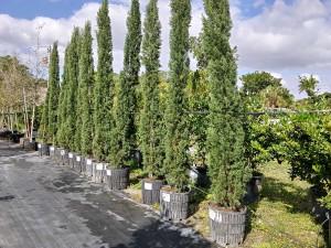 Landscape Plants and Garden Service