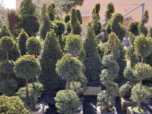 Landscape Plant and Garden Company